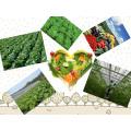 Высококачественное растворимое водорослевое удобрение