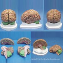 Modelo de Anatomia Médica do Cérebro Humano de Qualidade Natural de Alta Qualidade (R050108)
