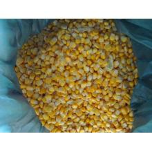 IQF frozen sweet corn kernels