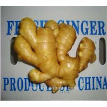 Свежий имбирь 200г из шаньдуна с хорошим качеством