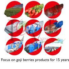 Nutritional professional OEM in bulk hot sales 100%pure goji