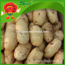 Factory Price China holland potato for Sale