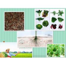 Wasserlösliche organische Mikroelement Stickstoff, Phosphor und Kalium NPK Dünger