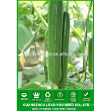 NCU181 Zishao F1 greenhouse cucumber seeds for planting