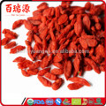 Goji plant goji berries calories goji berries health
