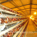 Automatic Layer Chicken Farm Equipment with SGS Certification