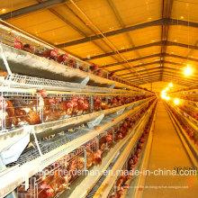 Automatische Schicht-Huhn-Bauernhof-Ausrüstung mit SGS-Bescheinigung