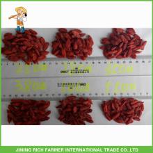 Goji seco Berry 180Grains / 50G
