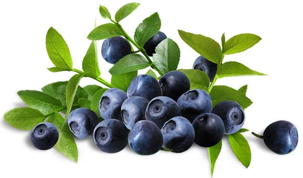 Natural Bilberry Extract (Anthocyanidins)