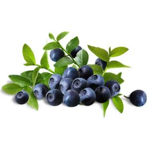 China OEM for Fruit Extracts Natural Bilberry Extract (Anthocyanidins) supply to Lebanon Manufacturer