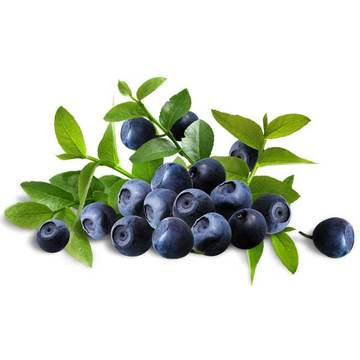 Cheap price for Plant Extracts Natural Bilberry Extract (Anthocyanidins) supply to Ireland Manufacturer