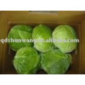 SW fresh cabbage( food grade)