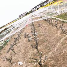 Rede de nylon do pássaro do PE do HDPE PP para o jardim