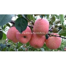 Nouvelle Crop Fresh FUJI Apple