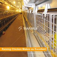 Equipo de granja de aves de corral de venta caliente de nuevo diseño para gallina ponedora