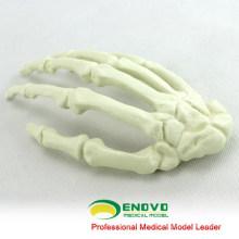 Modèle d'os artificiel médical de main d'OS de la SIMULATION 12324 de vente en gros, os de simulation de pratique d'orthopédie