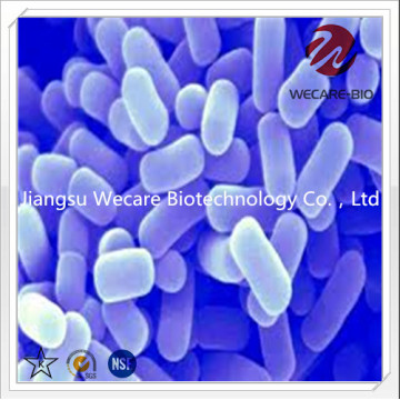Lactobacillus Plantarum Probiotics Powder