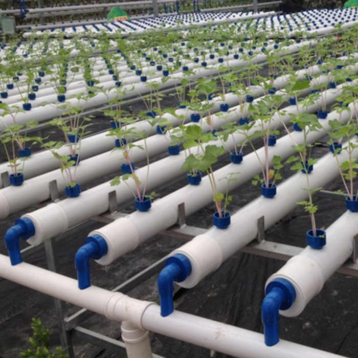 Large Flat Hydroponics with Soilless Planting