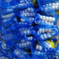 Natural Fresh White Garlic Wholesales