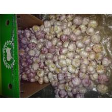 Hot Sale Fresh Normal Garlic