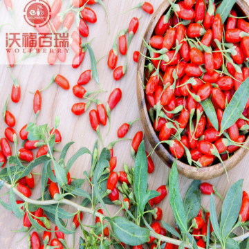 Wolfberry/Lycium Barbarum /organic goji berries