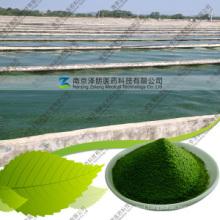 Manufacturers Wholesale Bulk Price Best Green Spirulina Powder