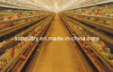 Layer Chicken Farm Poultry Equipment (A3L90)