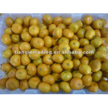 Mandarin orange Lieferant