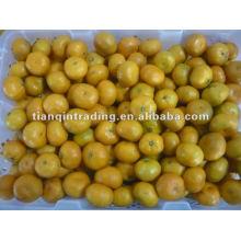 Fornecedor de tangerina