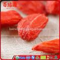 Goji berries for sale online fresh goji berries for sale buy goji berries plants