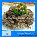 New frozen whole Japanese stone crab