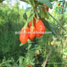 Sonnengetrocknete 100% natürliche zertifizierte Bio-Goji-Beeren-Pflanzen Sonnengetrocknete 100% natürliche zertifizierte Bio-Goji-Beeren-Pflanzen