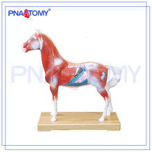 PNT-AM42 heißer Verkauf Pferd Akupunktur Modell Tier Anatomie Modell
