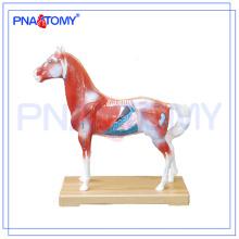 Modèle d'anatomie animale de modèle d'acupuncture de cheval de vente chaude de PNT-AM42