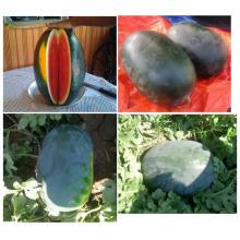 RW18 Meiyou semillas grandes ovales de sandía híbridas F1 negras para plantar