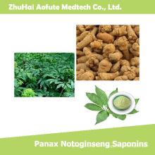 Saponines naturelles de qualité supérieure Panax Notoginseng