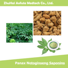 Top Quality Natural Panax Notoginseng Saponinas