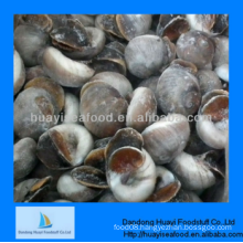 fresh tasty frozen adequate moon snail best supplier