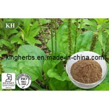 Extrait de plantain / Extrait de plantain asiatique en poudre N ° CAS: 84929-43-1