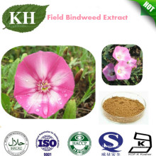 Convolvulus Arvensis Extract /Field Bindweed Extract