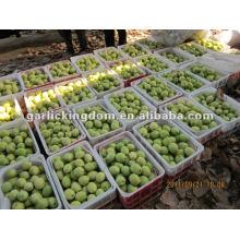 Heißer Verkauf, Shandong Birne vom Ursprung