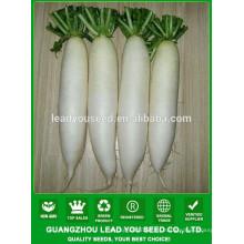 NR02 Haocy semillas de rábano de calidad blanca para el cultivo