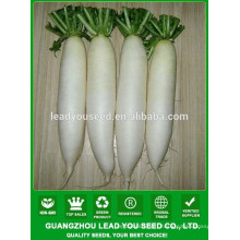 NR02 Haocy white quality radish seeds for growing