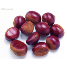 Organic Fresh Chestnut with Best Price