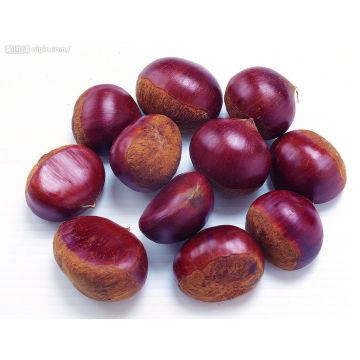 Chestnut fresco orgánico con el mejor precio