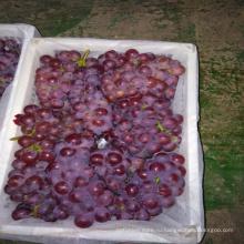 2017 свежие фрукты свежие экспортером винограда