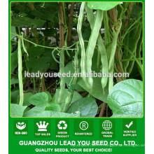 NBE07 Disi Guangzhou graines de haricot, toutes sortes de graines de légumes
