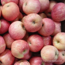 Pomme FUJI rouge fraîche