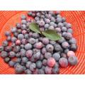 IQF Einfrieren Bio Blaubeere Zl-100007