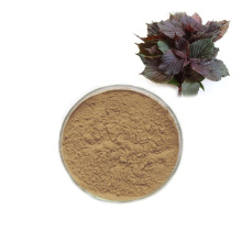 High quality Chinese Traditional Herbal Perilla Leaf Extract Powder